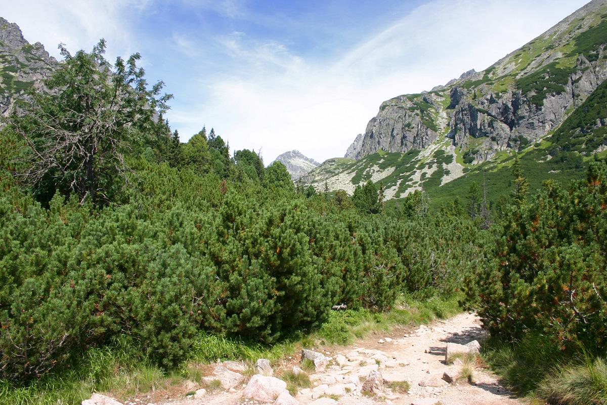 Mlynická dolina II