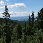 Les v Mlynické dolině