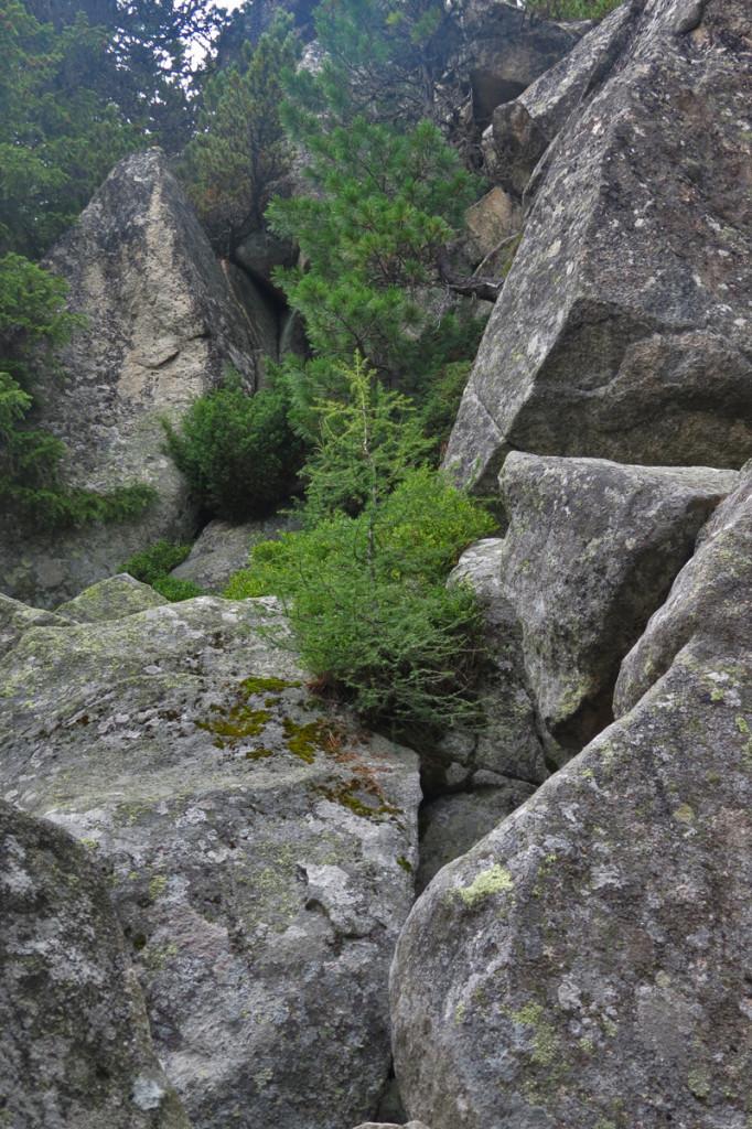 Tatranské bonsaje