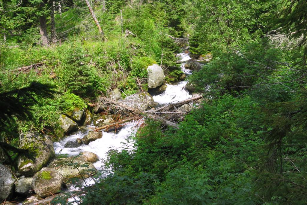 Velický potok