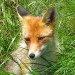 Terinka v trávě